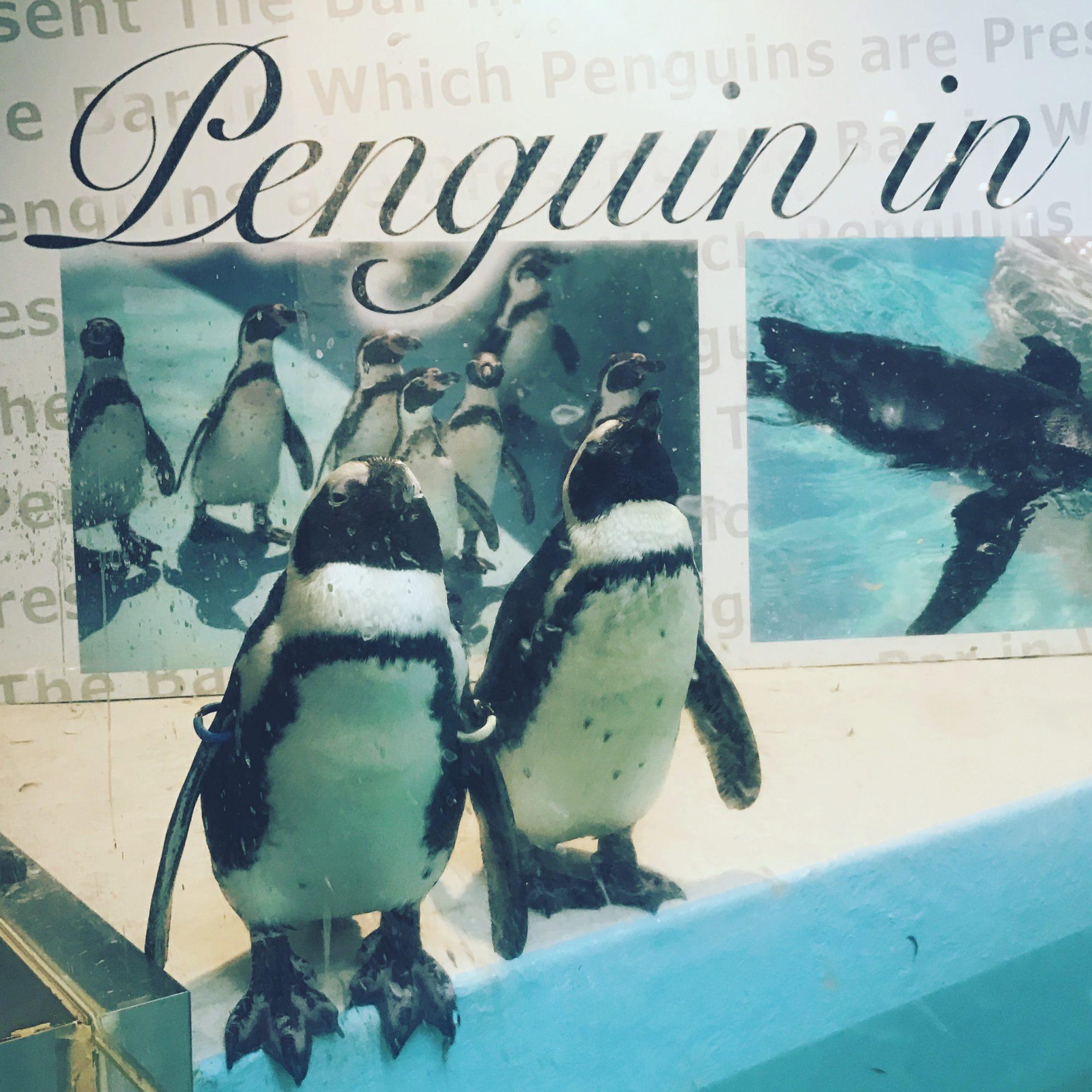 池袋【ペンギンのいるBAR】深夜までやってます!【東京】